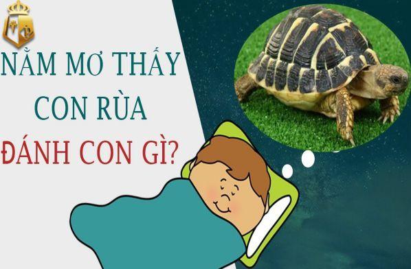 Mơ thấy rùa đánh con gì?
