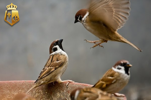 Giải mã chim bay vào nhà